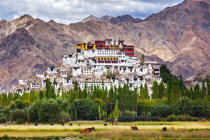 Ladakh & Markha Valley Trek – 12 Days